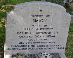 Simon Able Seacat