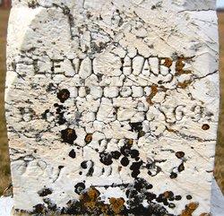 Levi Hare