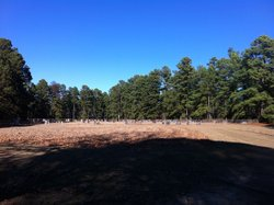 Willisville Cemetery