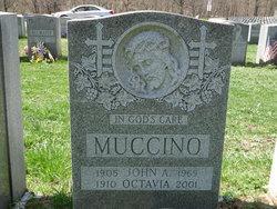 Octavia Tavie <i>Cotto</i> Muccino