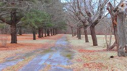 Central Islip State Hospital Grounds