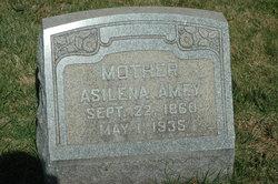Asilena <i>Scheetz</i> Amey