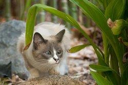 Silvie Cat