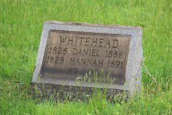 Daniel Whitehead
