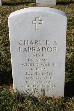 Charlie A Labrador