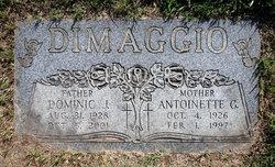 Dominic J Dimaggio