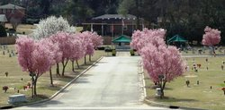 Hillcrest Memorial Park Cemetery