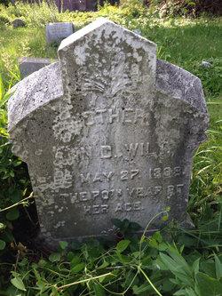 Ann D. Wilt
