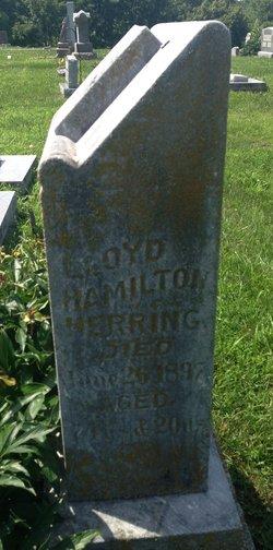 Lloyd Hamilton Herring