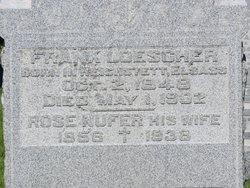 Rosa <i>Nufer</i> Loescher