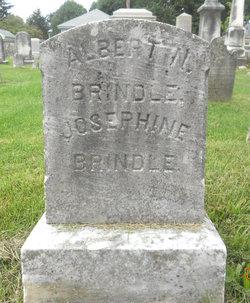 Albert N Brindle