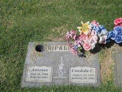 Candida Ripalda