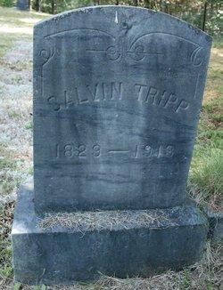 Calvin Tripp