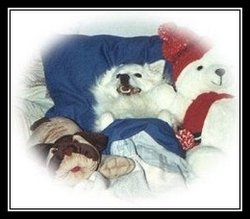 Charmin Fizz-Gig Charmie Dog