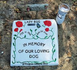 Lady Ladybug Hudson
