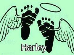 Harley Don Horath