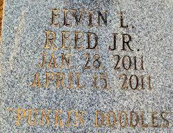 Elvin L. Punkin Doodles Reed, Jr