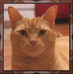 Cheerio Bachman Cat