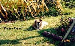 Bear Bear-Bear Ketchum