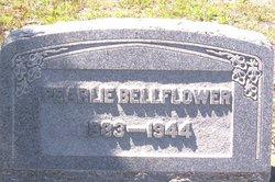 Pearl <i>Taylor</i> Bellflower