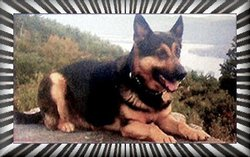 Officer Alex K-9 Dog