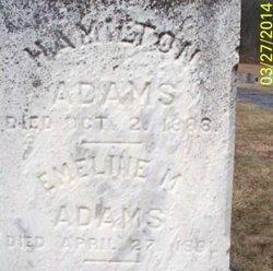 Hamilton Adams