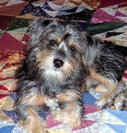Stewart Stewie Dog