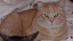 Mr. Magoo Cat
