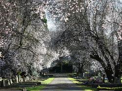 Darlington West Cemetery