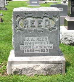 Jasper A Reed