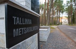 Metsakalmistu