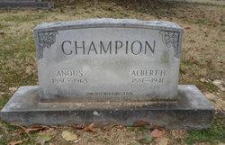 Anous Champion